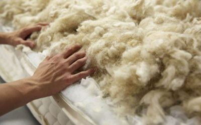 Why Wool? Interesting Facts on Why Natural is Best